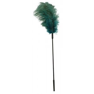 Turquoise feather